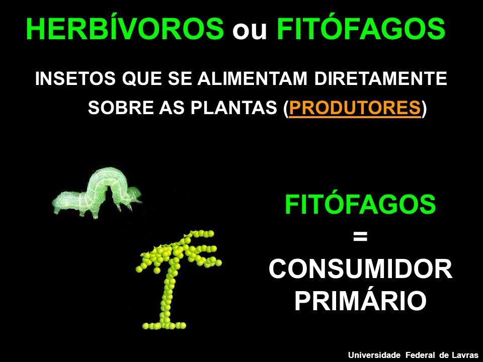 INSETOS QUE SE ALIMENTAM DIRETAMENTE SOBRE AS PLANTAS (PRODUTORES) HERBÍVOROS ou FITÓFAGOS FITÓFAGOS = CONSUMIDOR PRIMÁRIO Universidade Federal de Lavras