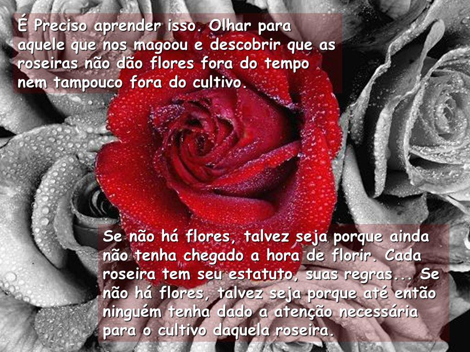 Se não há flores, talvez seja porque ainda não tenha chegado a hora de florir.