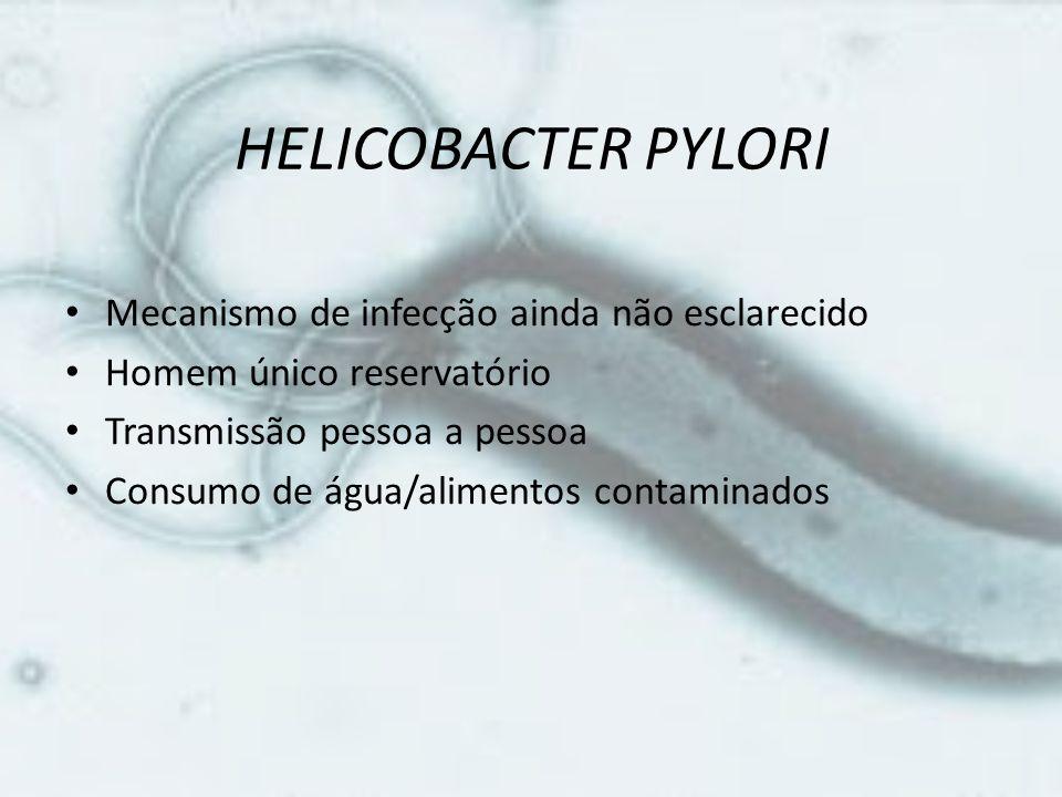 HELICOBACTER PYLORI • Mecanismo de infecção ainda não esclarecido • Homem único reservatório • Transmissão pessoa a pessoa • Consumo de água/alimentos