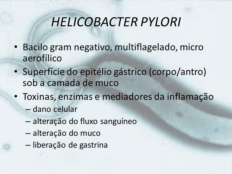 HELICOBACTER PYLORI • Bacilo gram negativo, multiflagelado, micro aerofílico • Superfície do epitélio gástrico (corpo/antro) sob a camada de muco • To