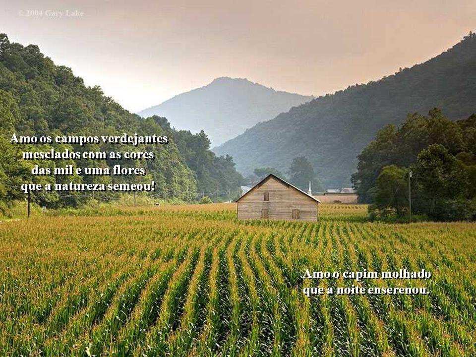 Amo os campos verdejantes mesclados com as cores das mil e uma flores que a natureza semeou.