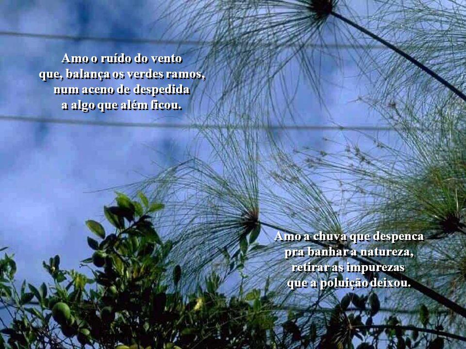Amo o ruído do vento que, balança os verdes ramos, num aceno de despedida a algo que além ficou.