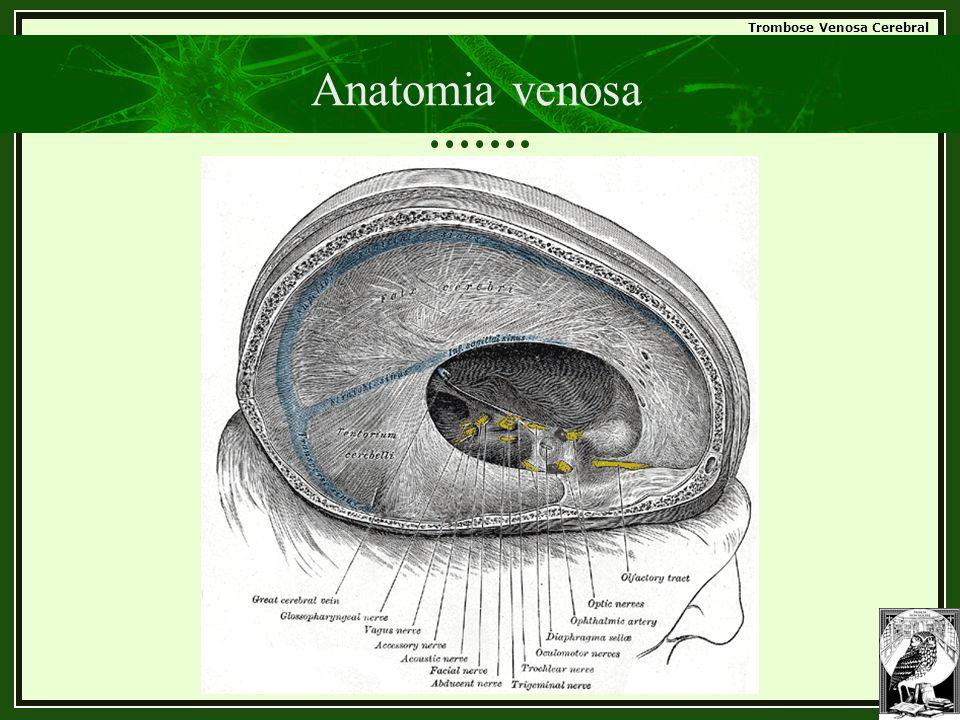 Trombose Venosa Cerebral Anatomia venosa