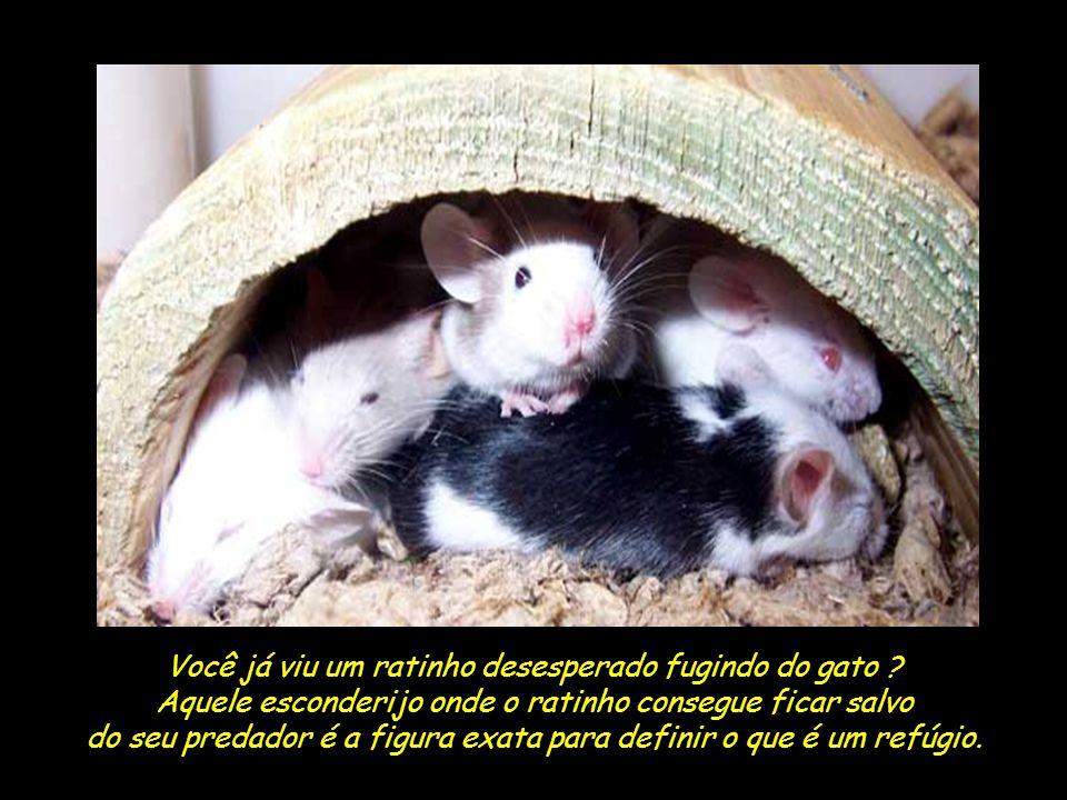 Você já viu um ratinho desesperado fugindo do gato .