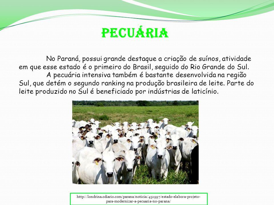 http://londrina.odiario.com/parana/noticia/452997/estado-elabora-projeto- para-modernizar-a-pecuaria-no-parana/ No Paraná, possui grande destaque a criação de suínos, atividade em que esse estado é o primeiro do Brasil, seguido do Rio Grande do Sul.