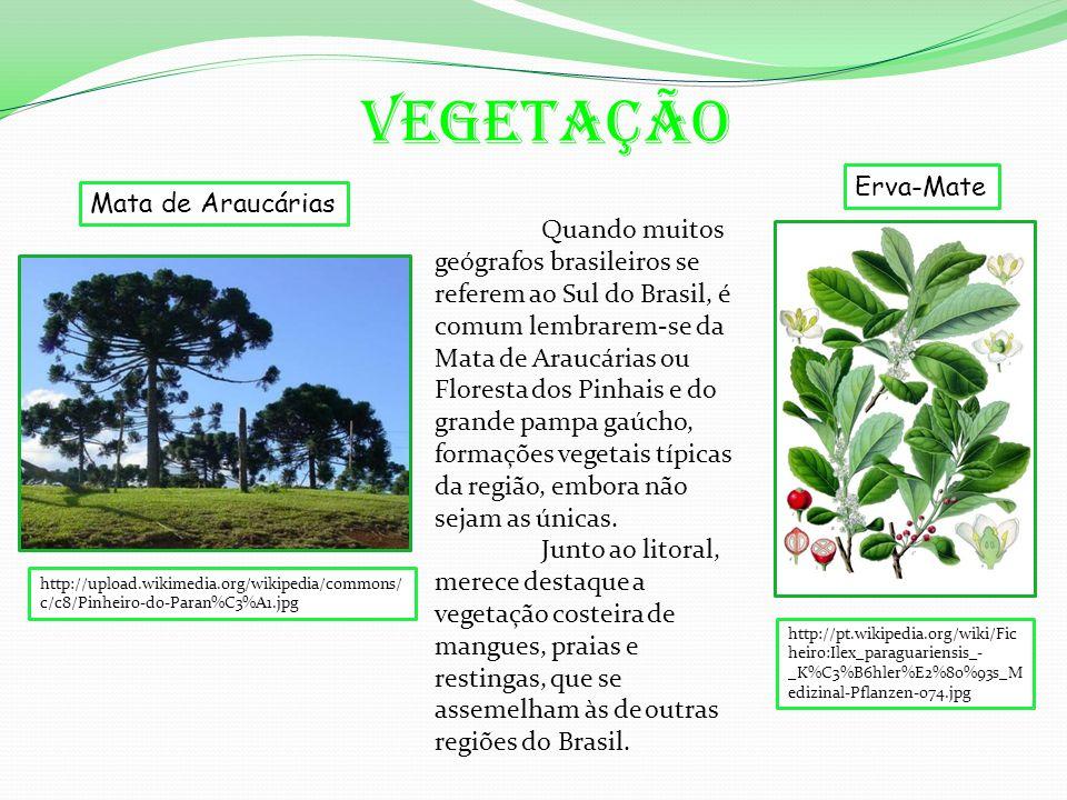 Vegetação Mata de Araucárias Erva-Mate http://upload.wikimedia.org/wikipedia/commons/ c/c8/Pinheiro-do-Paran%C3%A1.jpg http://pt.wikipedia.org/wiki/Fic heiro:Ilex_paraguariensis_- _K%C3%B6hler%E2%80%93s_M edizinal-Pflanzen-074.jpg Quando muitos geógrafos brasileiros se referem ao Sul do Brasil, é comum lembrarem-se da Mata de Araucárias ou Floresta dos Pinhais e do grande pampa gaúcho, formações vegetais típicas da região, embora não sejam as únicas.