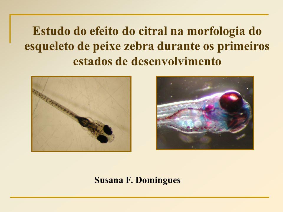 Susana F. Domingues Estudo do efeito do citral na morfologia do esqueleto de peixe zebra durante os primeiros estados de desenvolvimento