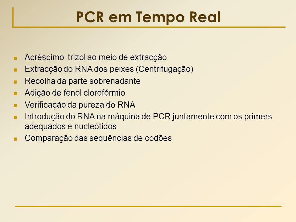 PCR em Tempo Real  Acréscimo trizol ao meio de extracção  Extracção do RNA dos peixes (Centrifugação)  Recolha da parte sobrenadante  Adição de fe