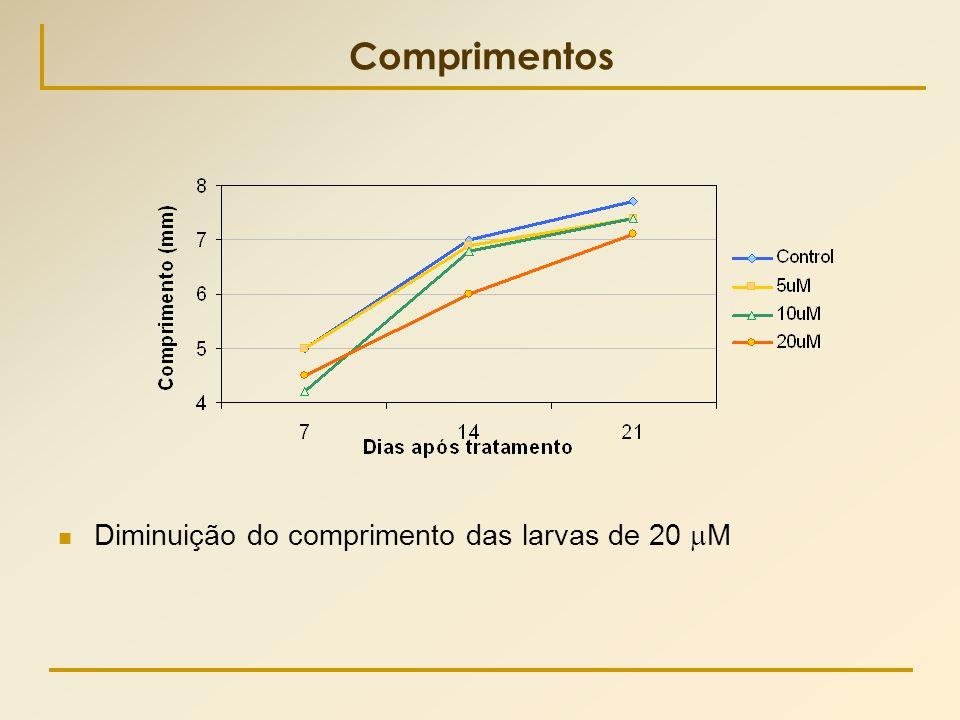 Comprimentos  Diminuição do comprimento das larvas de 20  M