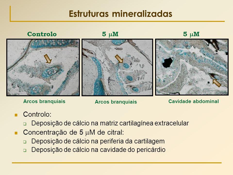 Controlo 5  M Estruturas mineralizadas  Controlo:  Deposição de cálcio na matriz cartilagínea extracelular  Concentração de 5  M de citral:  Dep