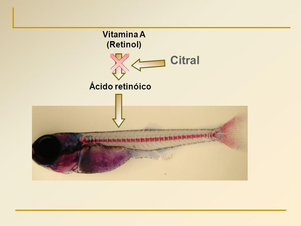 Ácido retinóico Vitamina A (Retinol) Citral