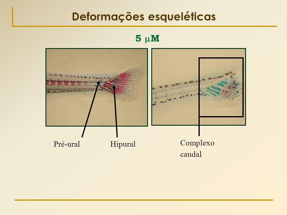 Deformações esqueléticas Pré-ural Complexo caudal Hipural 5  M