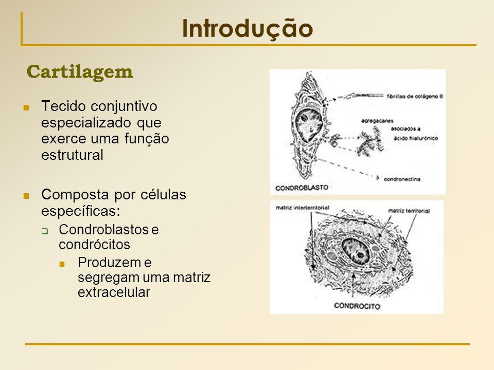 Introdução  Tecido conjuntivo especializado que exerce uma função estrutural  Composta por células específicas:  Condroblastos e condrócitos  Prod