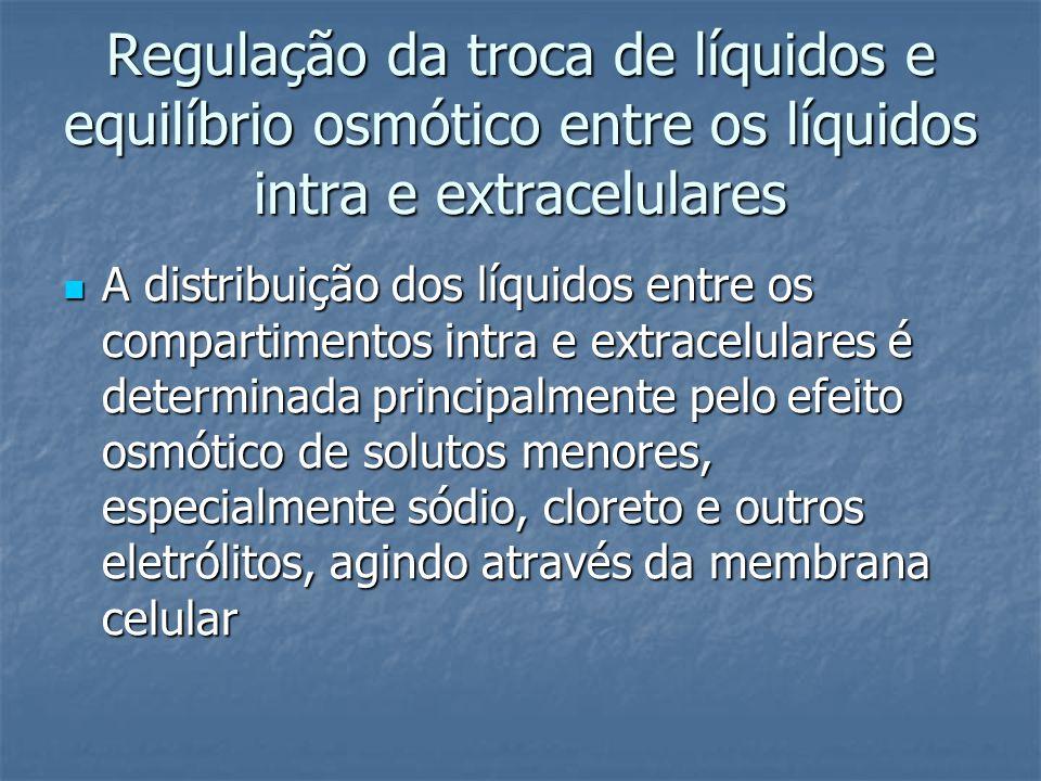 Regulação da troca de líquidos e equilíbrio osmótico entre os líquidos intra e extracelulares  A distribuição dos líquidos entre os compartimentos in