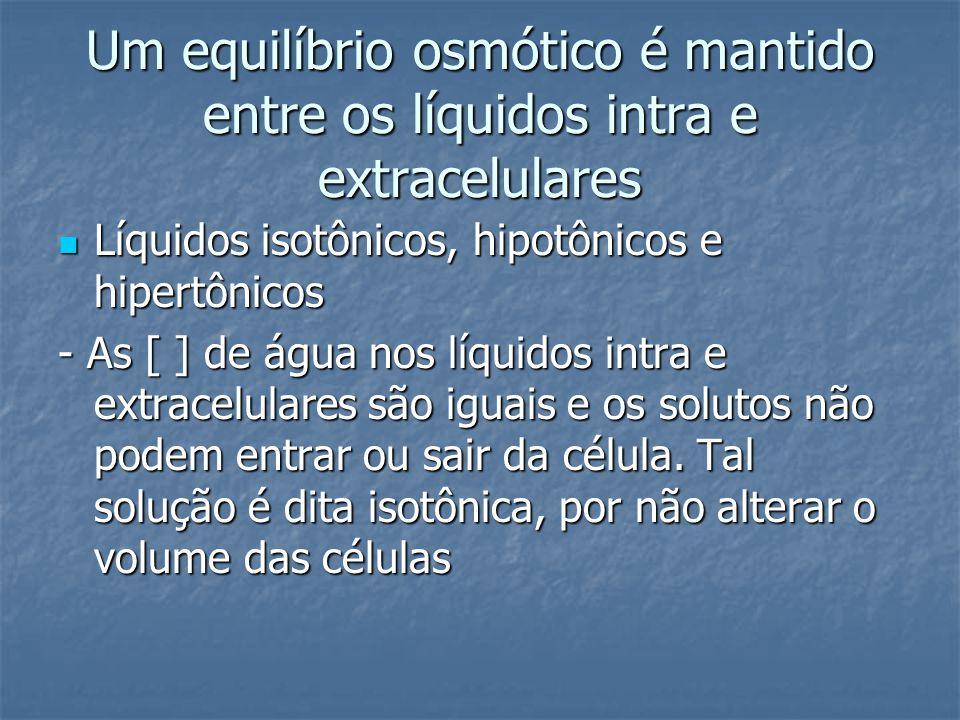 Um equilíbrio osmótico é mantido entre os líquidos intra e extracelulares  Líquidos isotônicos, hipotônicos e hipertônicos - As [ ] de água nos líqui