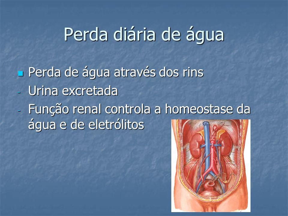 Perda diária de água  Perda de água através dos rins - Urina excretada - Função renal controla a homeostase da água e de eletrólitos