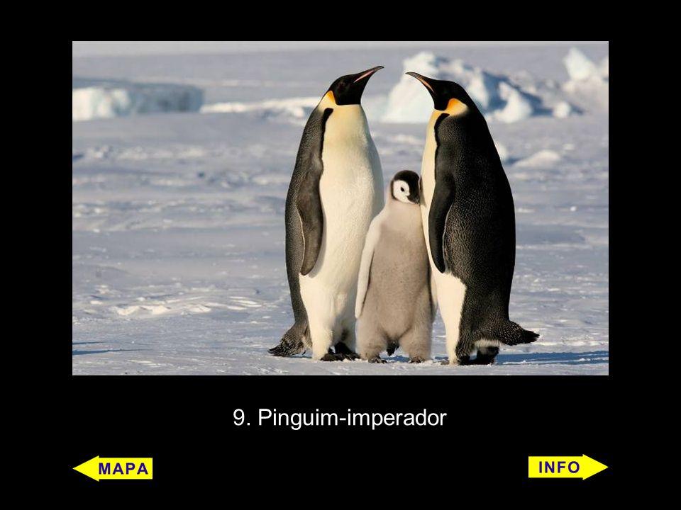 9. Pinguim-imperador