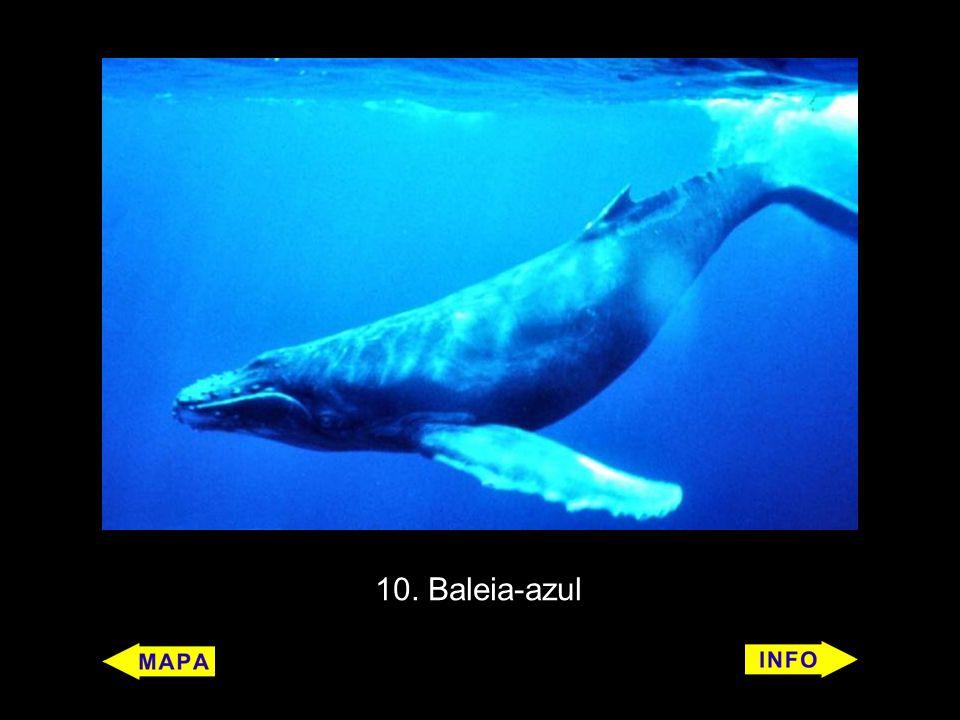 10. Baleia-azul