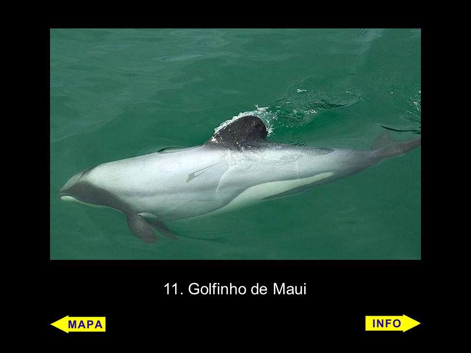 11. Golfinho de Maui