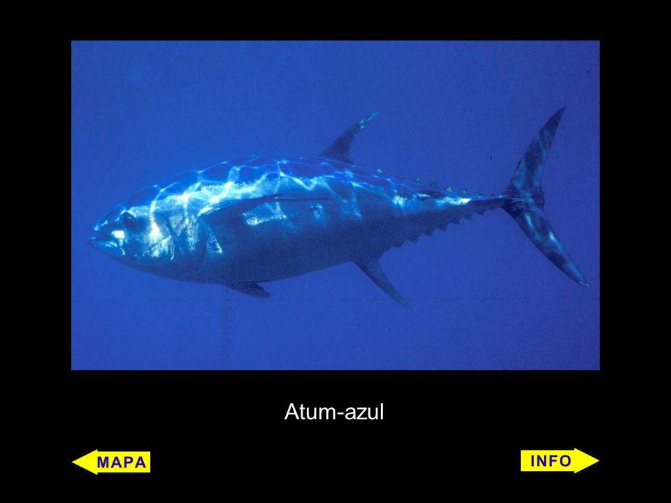 Atum-azul