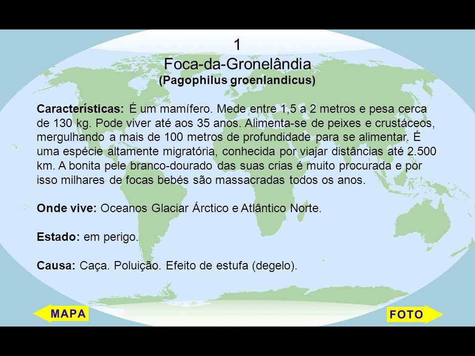 1 Foca-da-Gronelândia (Pagophilus groenlandicus) Características: É um mamífero. Mede entre 1,5 a 2 metros e pesa cerca de 130 kg. Pode viver até aos