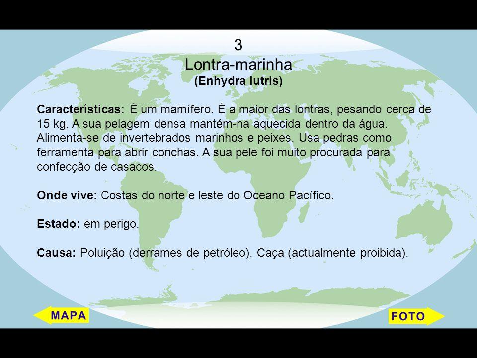3 Lontra-marinha (Enhydra lutris) Características: É um mamífero. É a maior das lontras, pesando cerca de 15 kg. A sua pelagem densa mantém-na aquecid