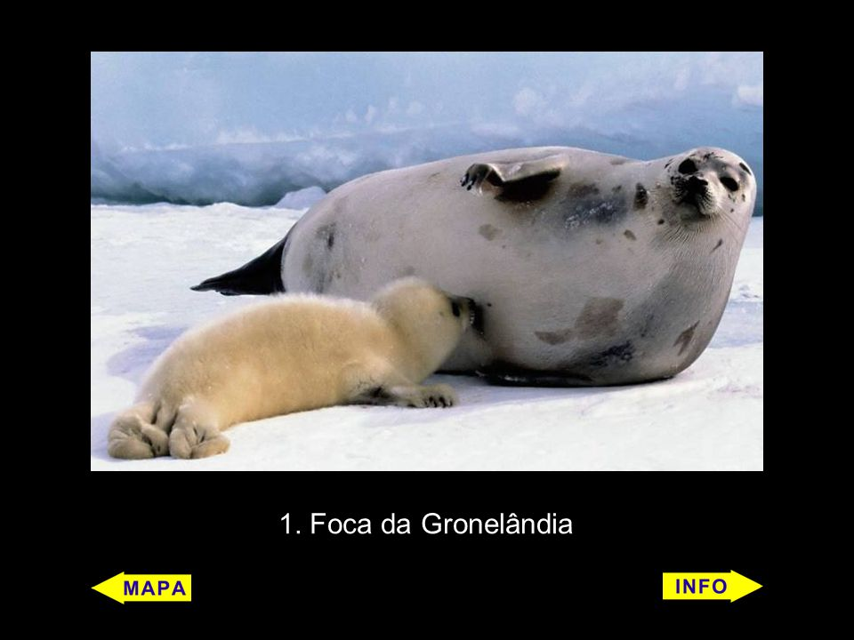 14 Cachalote (Physeter macrocephalus) Características: É um mamífero.