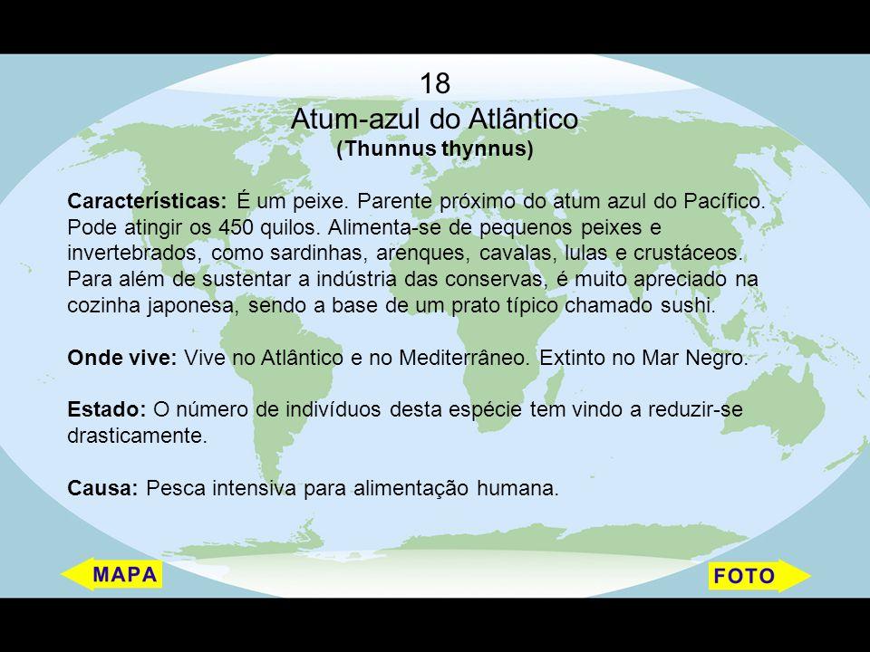 18 Atum-azul do Atlântico (Thunnus thynnus) Características: É um peixe. Parente próximo do atum azul do Pacífico. Pode atingir os 450 quilos. Aliment