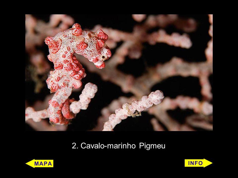5 Iguana marinha (Amblyrhynchus cristatus) Características: É um réptil.