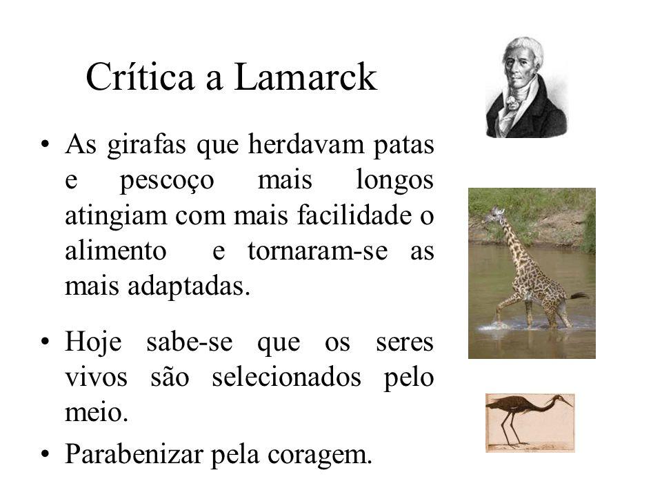 Crítica a Lamarck •As girafas que herdavam patas e pescoço mais longos atingiam com mais facilidade o alimento e tornaram-se as mais adaptadas. •Hoje