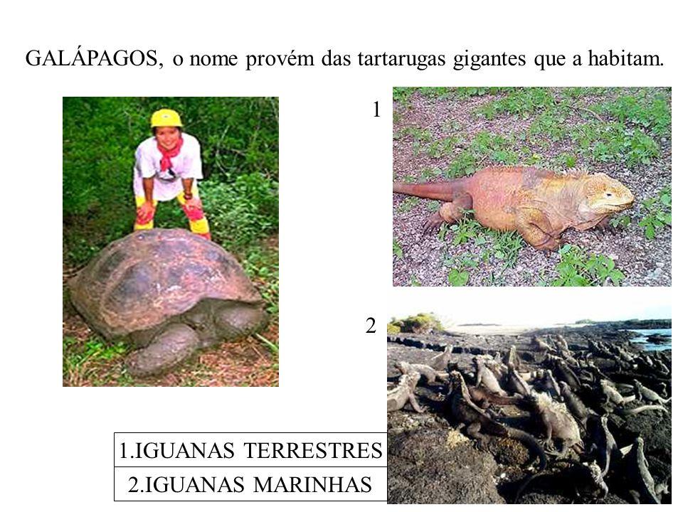 GALÁPAGOS, o nome provém das tartarugas gigantes que a habitam. 1.IGUANAS TERRESTRES 2.IGUANAS MARINHAS 1 2