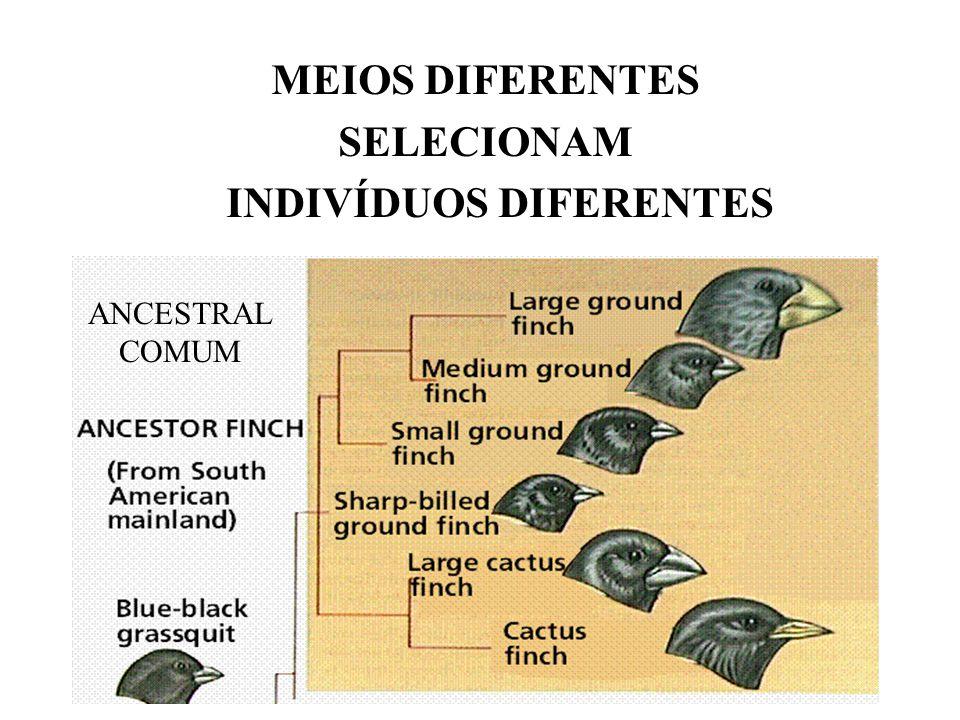 MEIOS DIFERENTES SELECIONAM INDIVÍDUOS DIFERENTES ANCESTRAL COMUM