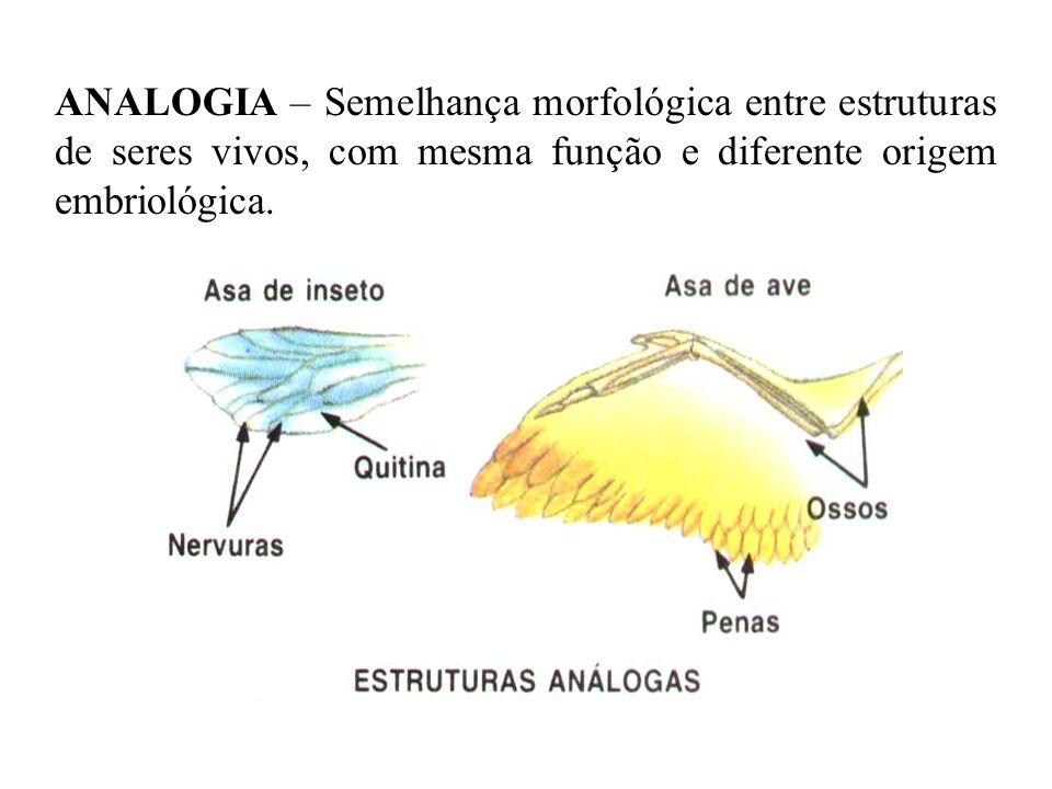 ANALOGIA – Semelhança morfológica entre estruturas de seres vivos, com mesma função e diferente origem embriológica.