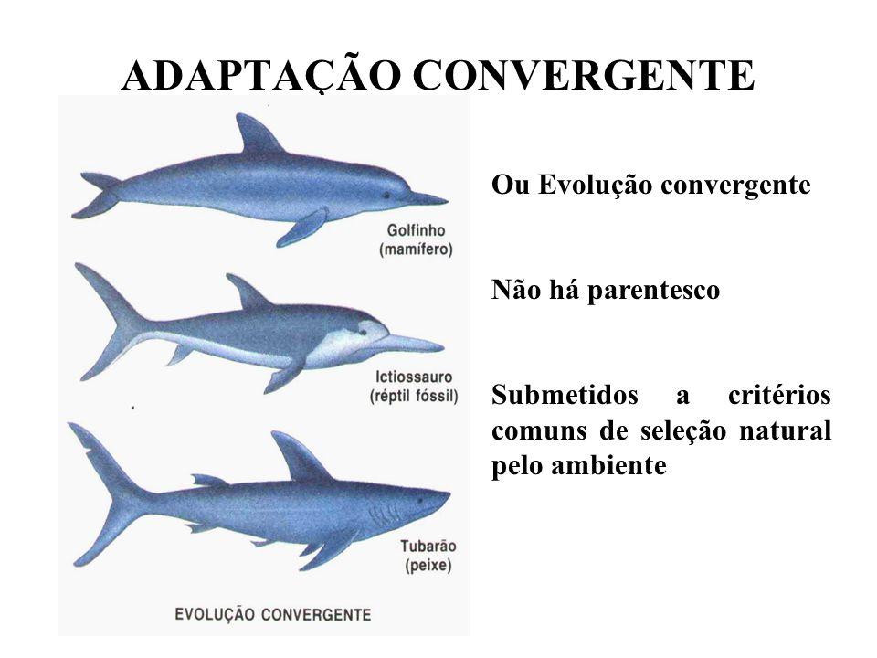 ADAPTAÇÃO CONVERGENTE Ou Evolução convergente Não há parentesco Submetidos a critérios comuns de seleção natural pelo ambiente