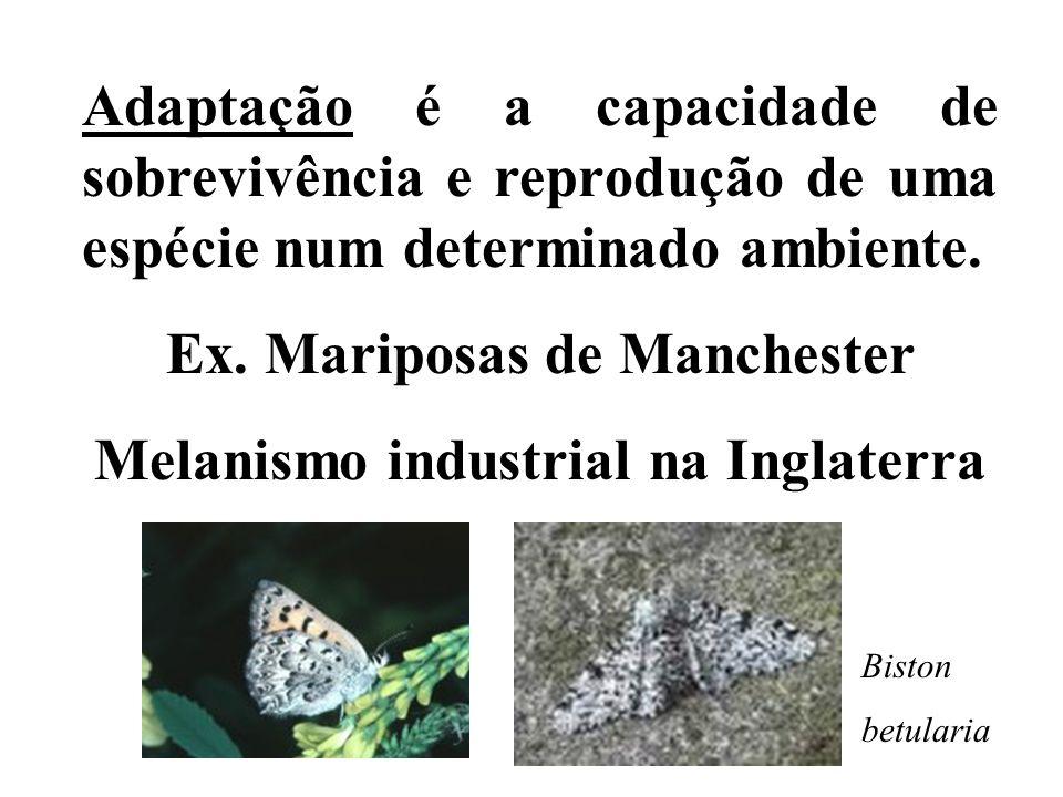 Adaptação é a capacidade de sobrevivência e reprodução de uma espécie num determinado ambiente. Ex. Mariposas de Manchester Melanismo industrial na In