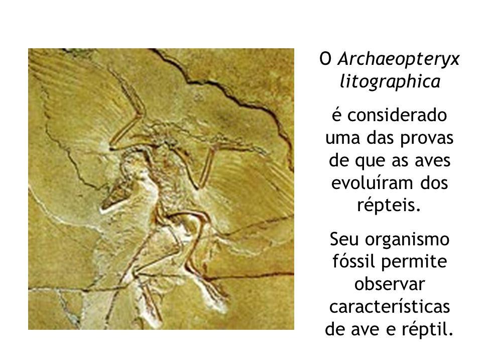 O Archaeopteryx litographica é considerado uma das provas de que as aves evoluíram dos répteis. Seu organismo fóssil permite observar características