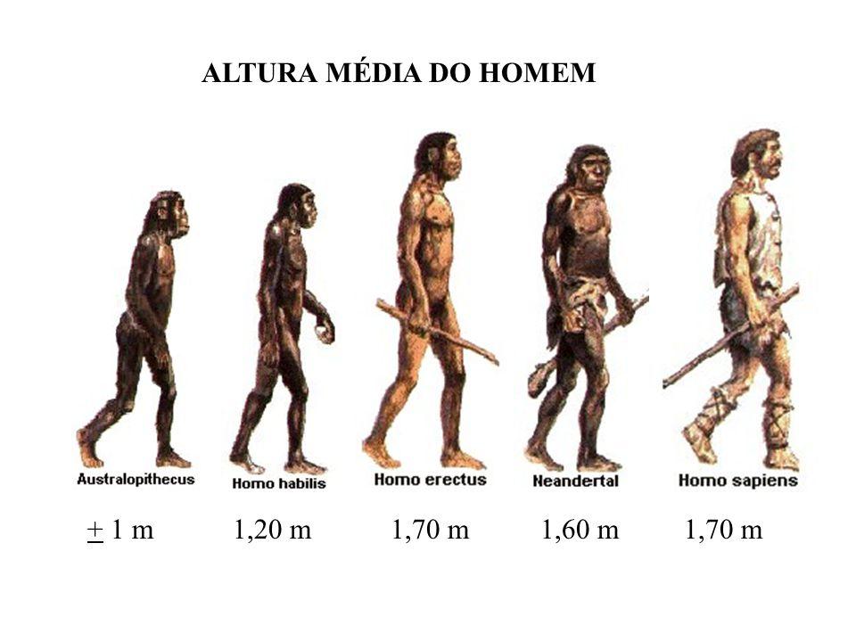 + 1 m 1,20 m 1,70 m 1,60 m 1,70 m ALTURA MÉDIA DO HOMEM