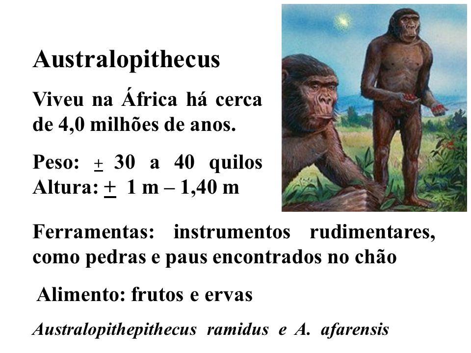 Australopithecus Viveu na África há cerca de 4,0 milhões de anos. Peso: + 30 a 40 quilos Altura: + 1 m – 1,40 m Ferramentas: instrumentos rudimentares