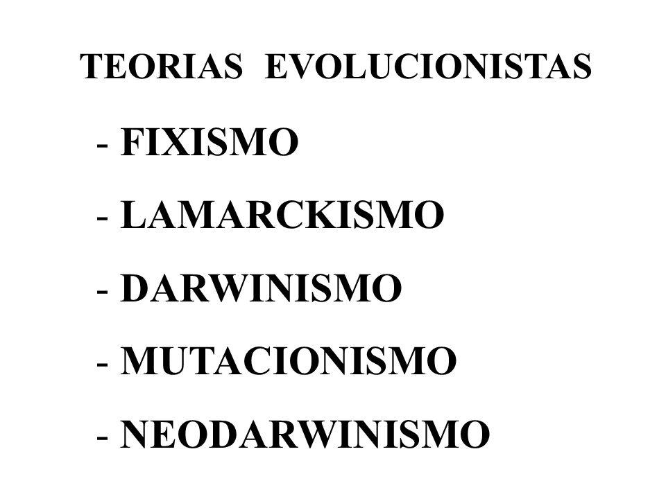 - FIXISMO - LAMARCKISMO - DARWINISMO - MUTACIONISMO - NEODARWINISMO TEORIAS EVOLUCIONISTAS