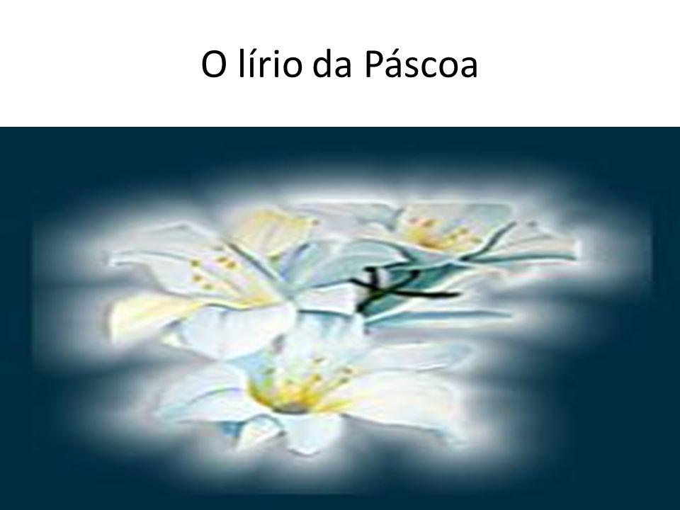 • O lírio - símbolo da pureza pela sua cor e delicada forma -também simboliza inocência e a vida junto a Deus.
