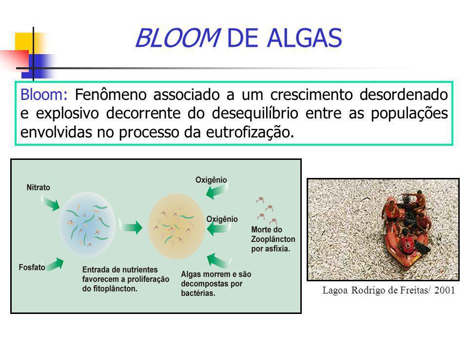 BLOOM DE ALGAS Bloom: Fenômeno associado a um crescimento desordenado e explosivo decorrente do desequilíbrio entre as populações envolvidas no proces