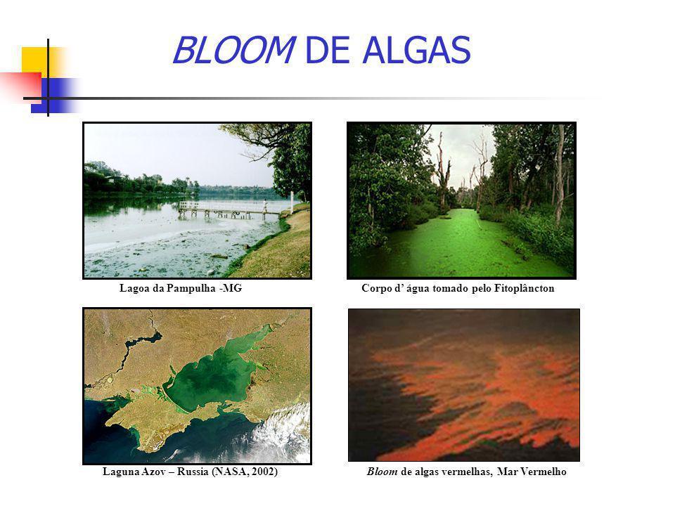 BLOOM DE ALGAS Lagoa da Pampulha -MG Laguna Azov – Russia (NASA, 2002)Bloom de algas vermelhas, Mar Vermelho Corpo d' água tomado pelo Fitoplâncton