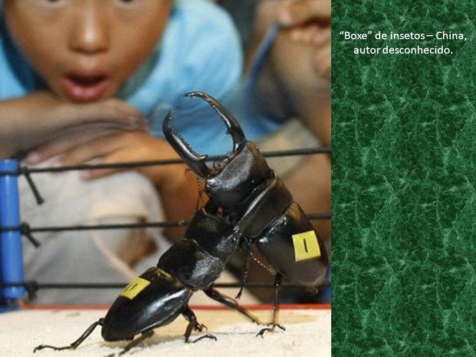 """""""Boxe"""" de insetos – China, autor desconhecido."""