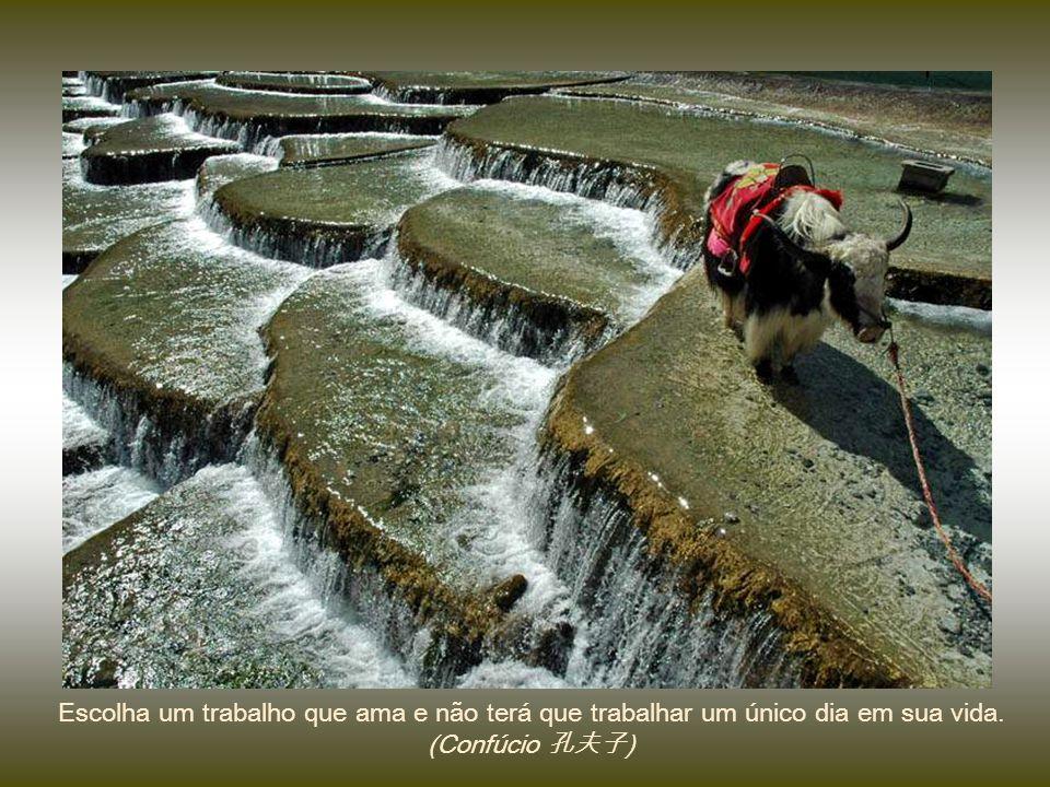 Não são as más ervas que sufocam o grão, é a negligência do cultivador. (Confúcio 孔夫子) 