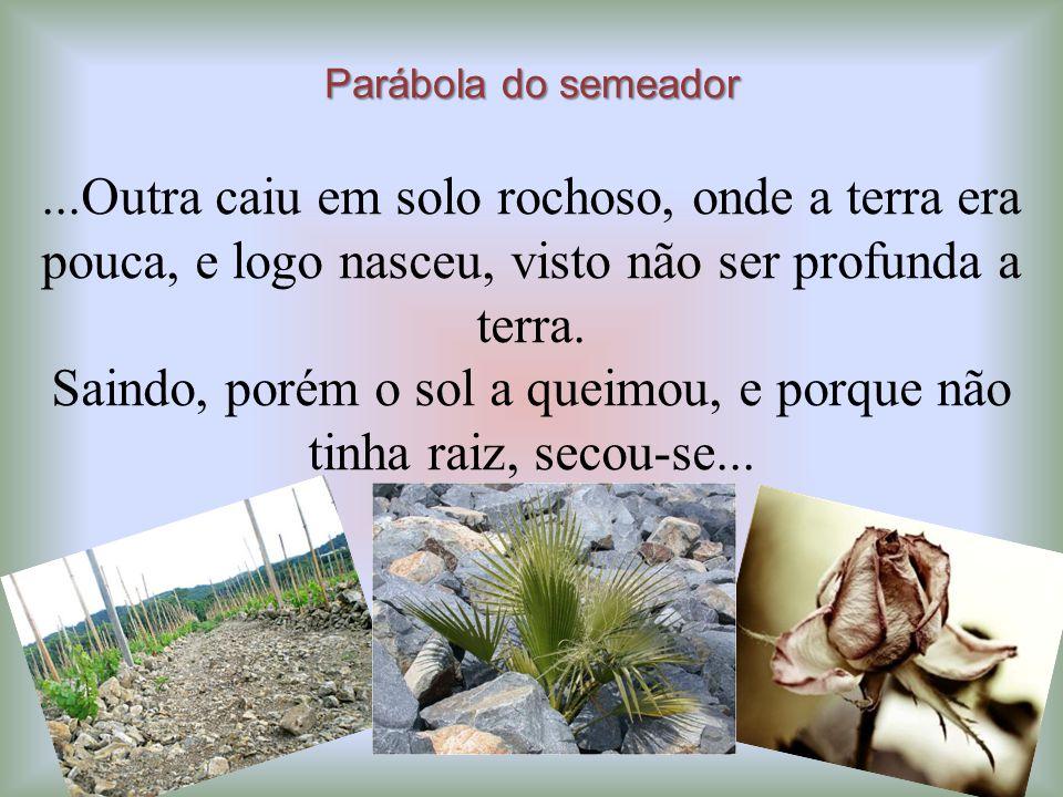 Parábola do semeador...Outra caiu em solo rochoso, onde a terra era pouca, e logo nasceu, visto não ser profunda a terra. Saindo, porém o sol a queimo