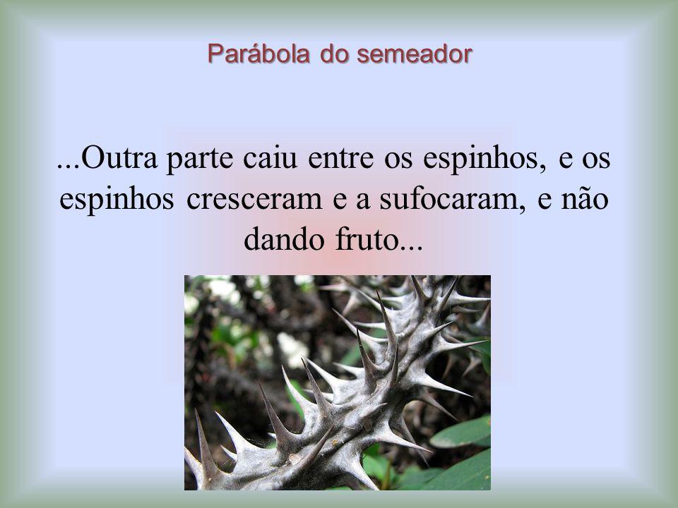 Parábola do semeador...Outra parte caiu entre os espinhos, e os espinhos cresceram e a sufocaram, e não dando fruto...
