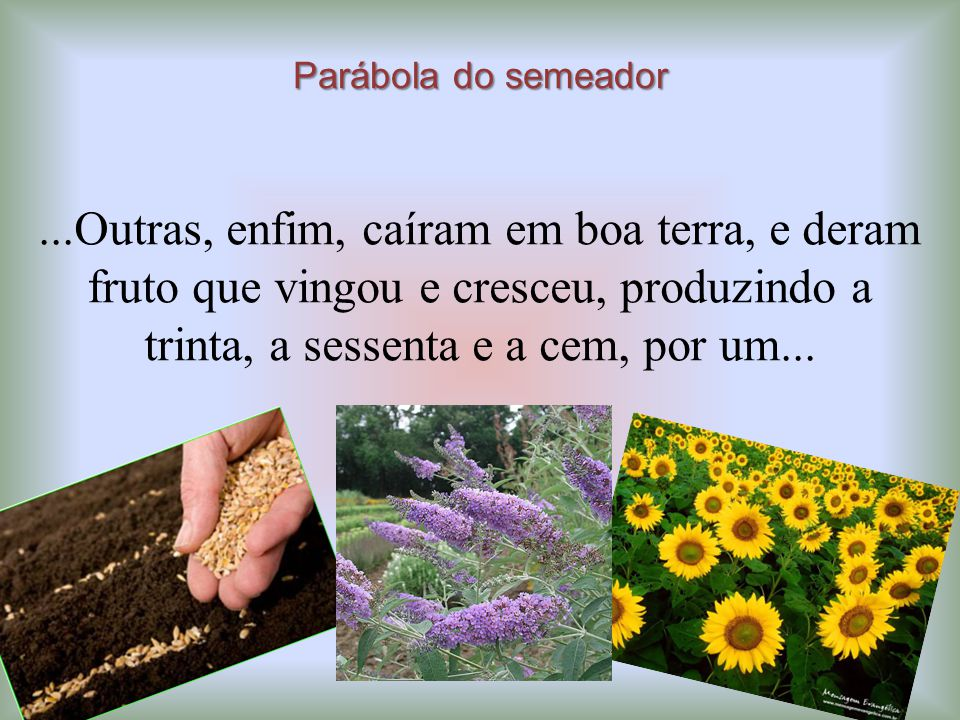 Parábola do semeador...Outras, enfim, caíram em boa terra, e deram fruto que vingou e cresceu, produzindo a trinta, a sessenta e a cem, por um...