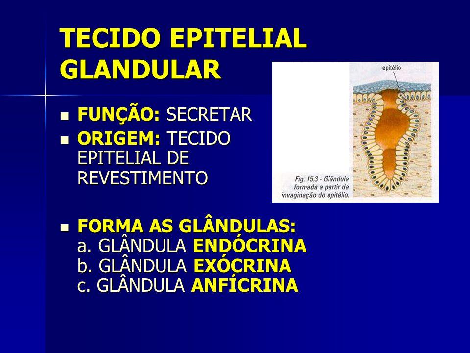 TECIDO EPITELIAL GLANDULAR  FUNÇÃO: SECRETAR  ORIGEM: TECIDO EPITELIAL DE REVESTIMENTO  FORMA AS GLÂNDULAS: a. GLÂNDULA ENDÓCRINA b. GLÂNDULA EXÓCR