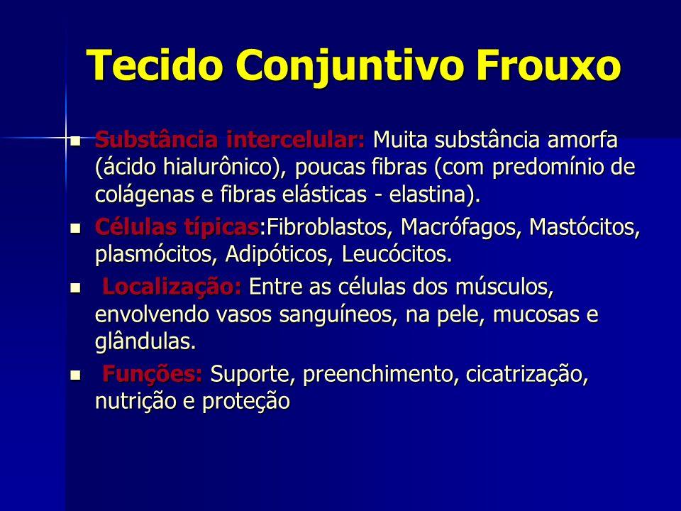Tecido Conjuntivo Frouxo  Substância intercelular: Muita substância amorfa (ácido hialurônico), poucas fibras (com predomínio de colágenas e fibras elásticas - elastina).