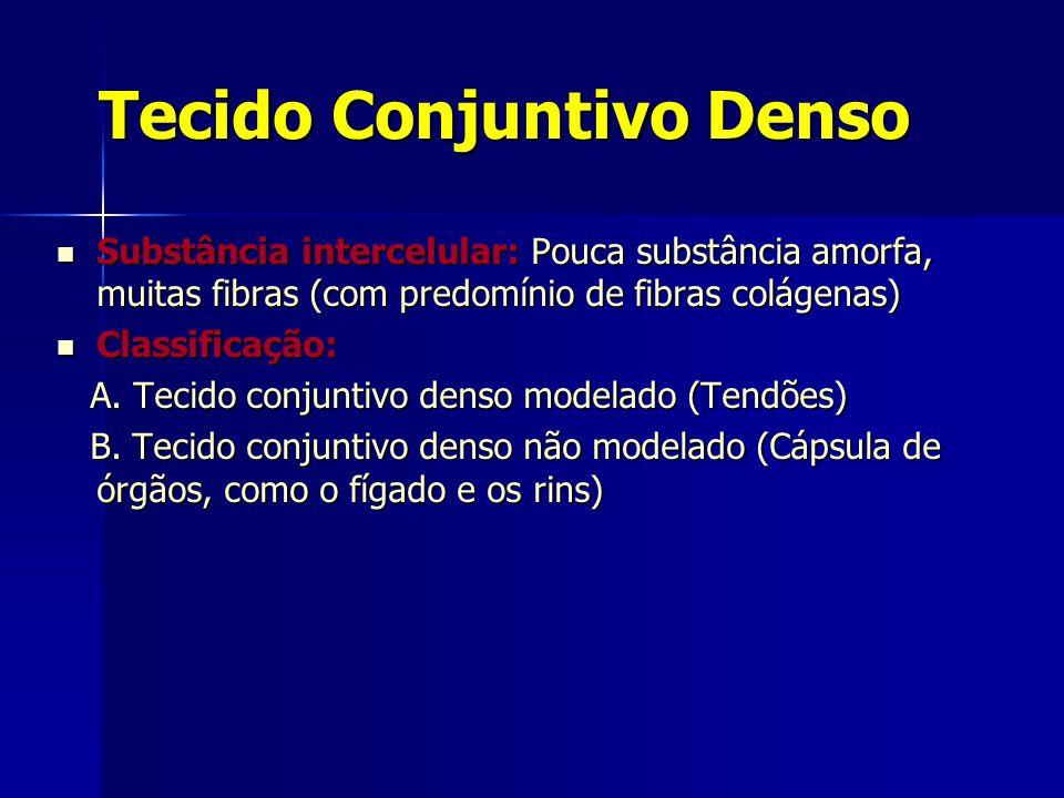 Tecido Conjuntivo Denso  Substância intercelular: Pouca substância amorfa, muitas fibras (com predomínio de fibras colágenas)  Classificação: A. Tec